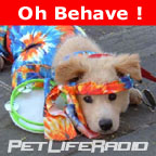 "Vote for ""Oh Behave"" at www.podcastawards.com"
