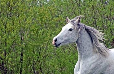 Animal Communication for Horses