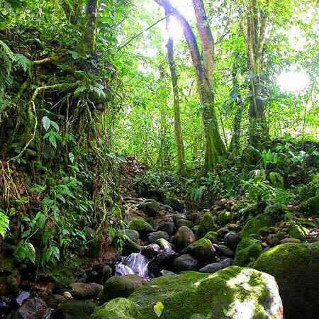 The Rainforest - our Natural Medecine Storehouse
