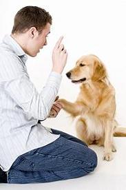 Итак, Вы взялись дрессировать и воспитывать свою собаку сами.