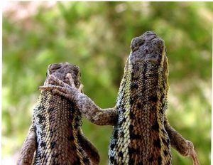 DavidChernoff Lizards Codependency