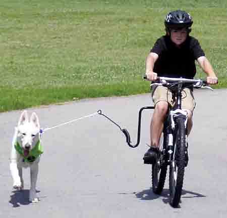 Springer Bike Attachment Exercises You and Your Dog