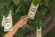 Money can grown on trees with Costa Rica Invest