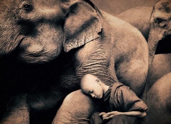 Elephant Boy Life and Death