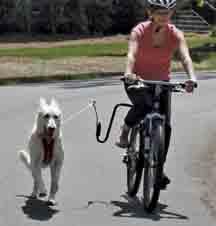 Springer Dog Exerciser Canada