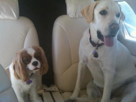 Desert Jet travelers, T-Bone and Archie
