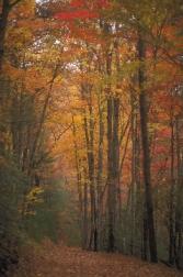 Dawsonville, Ga., in the fall