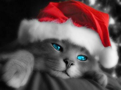 christmas-cat 2