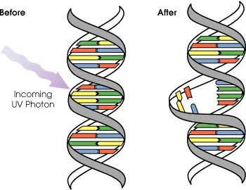 NP induced DNA Damage by QED radiation