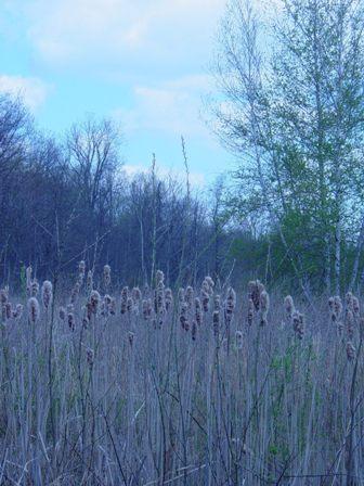 LDFA Wetland