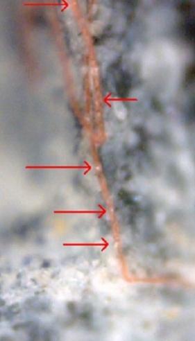 Blood vessel fossil found in sculptured meteorites