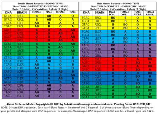 2 Blood Types Model - Female and Male
