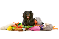 Quality assurance service for pet industry