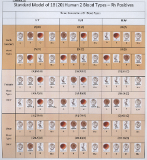 Standard Model of 18 Human Blood Types,Copyrighted