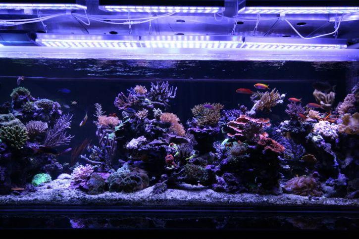 Orphek reef aquarium led lighting