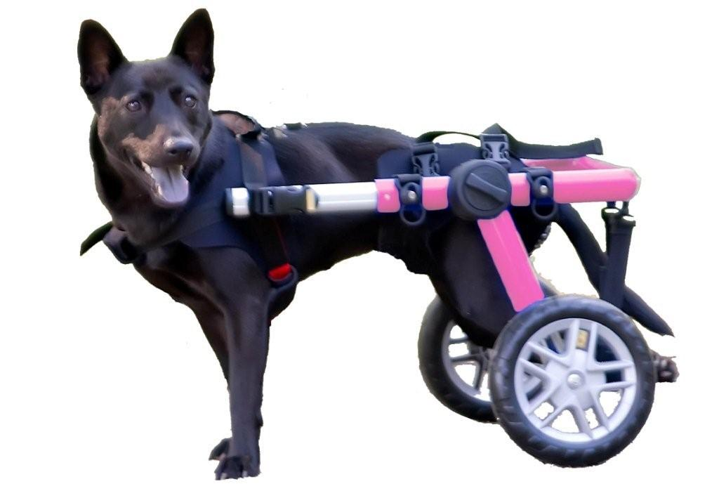 Top Five Reasons for a Dog Wheelchair HandicappedPets