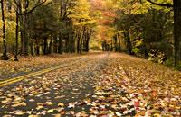 Blue Ridge Mountain Highway Autumn