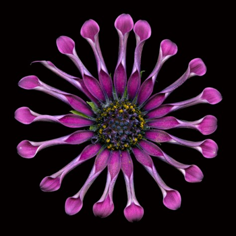 Whirligig Copyright David Leaser Fine Art