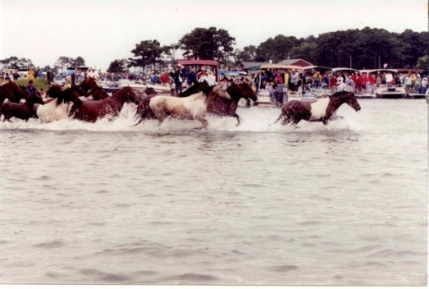 Annual Chincoteague Pony Swim