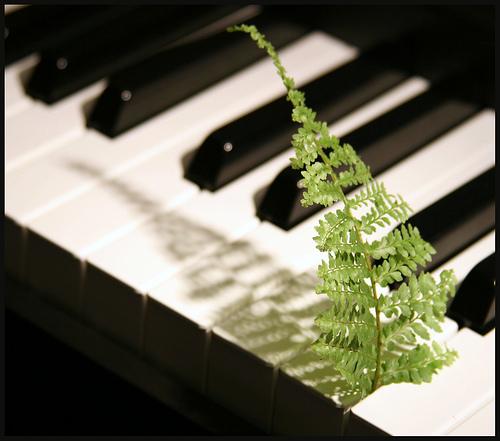 Piano Gardening