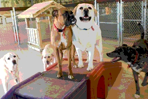 Canine Campers at Camp Bow Wow