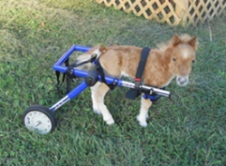 Horse in Walkin Wheels Dog Wheelchair