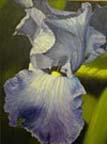 iris.sm