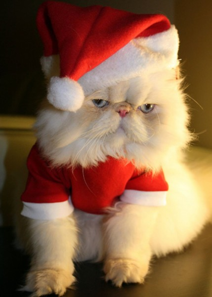 cat-santa-hat--large-msg-119849511568