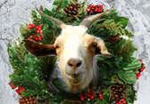 Gifts That Matter Holiday Goat