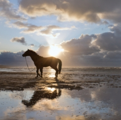 Horses in spirit receive a discount in January