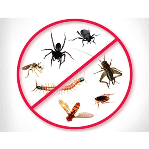 nyc_pest_control_services