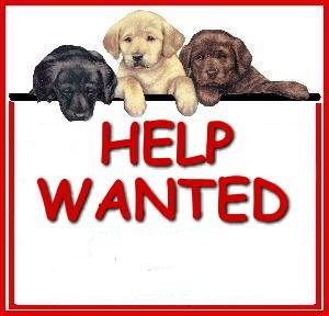 Sun Valley Animal Shelter help_wanted