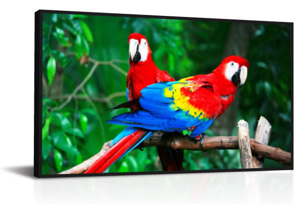 DynaScan DS65LT4 65-inch High Brightness LCD