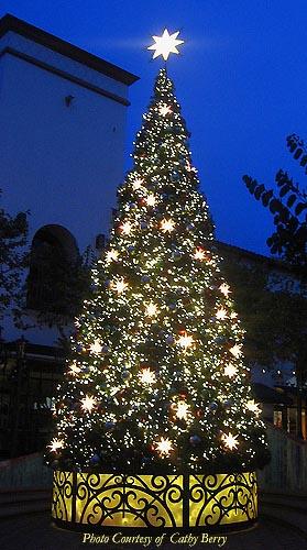 custom 34 oregon cascade fir tree