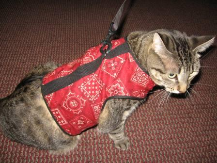 Kitty Holster cat harness receives U.S. Patent.