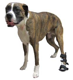 Walkin' Wheels Splints for Dogs