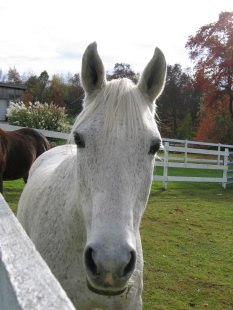 """Maureen's adopted mare, """"Hayley"""""""