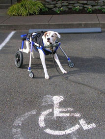 Front Wheels for Walkin' Wheels Dog Wheelchair