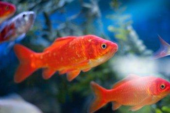 Fish at St Andrews Aquarium in Fife, Scotland