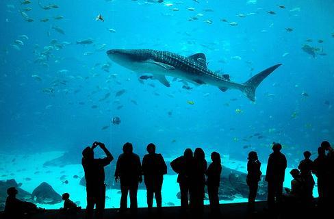 Take A Dip In The Deep Blue Sea Prlog