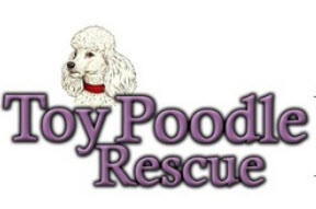 Toy Poodle Rescue