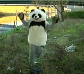 Rocky Panda
