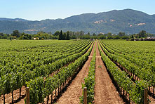 Bed & Breakfasts and Wineries