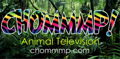 Chommmp! Animal Television