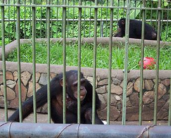 Enjoy The Wildlife At The Accra Zoo Travelhouse Uk Prlog