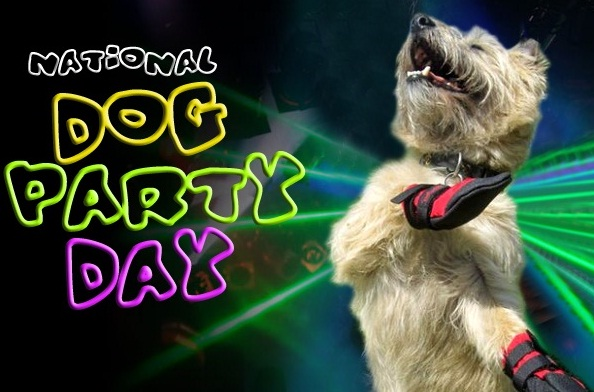 dogpartyimage