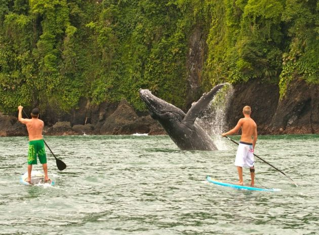 Paddle boarding in Colombia