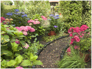 Time to think about your fall garden.