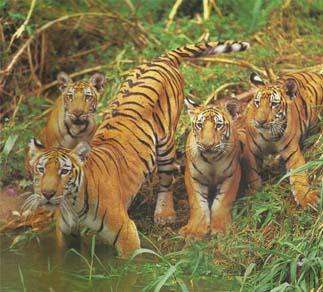 Wildlife in Rajasthan