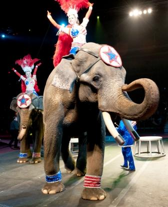 The 2012 Maskat Shrine Circus Rocks the MPEC Kay Yeager Coliseum ...